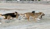 وفاة طفل هاجمه كلب ضال في شاطئ العقير بالأحساء