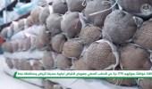 بالفيديو.. ضبط 83 مخالفًا لنظام البيئة في عدد من مناطق المملكة