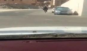 الفضول يدفع بسائق هايلكس بتصوير فتاة على دراجة ليشارك المقطع مع أصدقائه