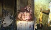 شاهد.. لحظة هروب عمالة تجهز اللحوم وسط القمامة إثر مداهمتهم بالبطحاء