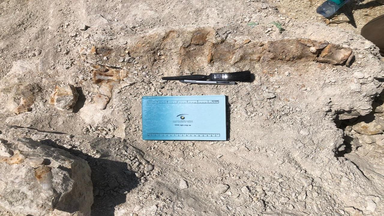 بالفيديو.. اكتشاف بقايا حوت  منقرض منذ 37 مليون سنة شمال المملكة