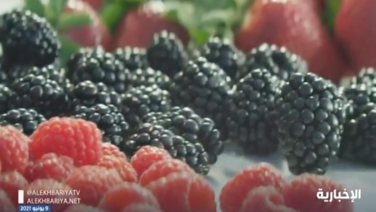 بالفيديو.. مزارعو القصيم ينجحون بجني التوت باستخدام الطاقة النظيفة