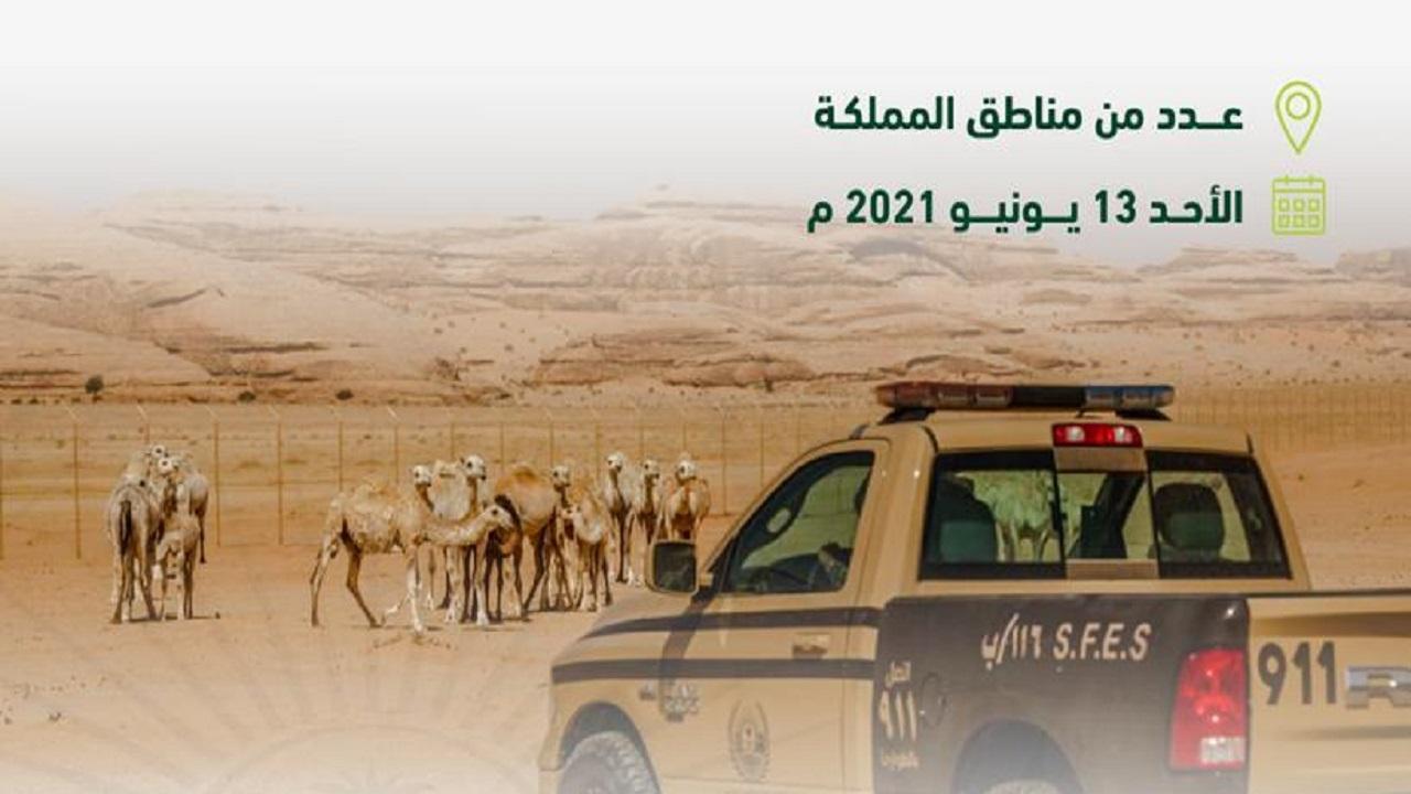"""""""الأمن البيئي"""" يوقف 36 مخالفًا لنظام البيئة لارتكابهم مخالفات رعي"""