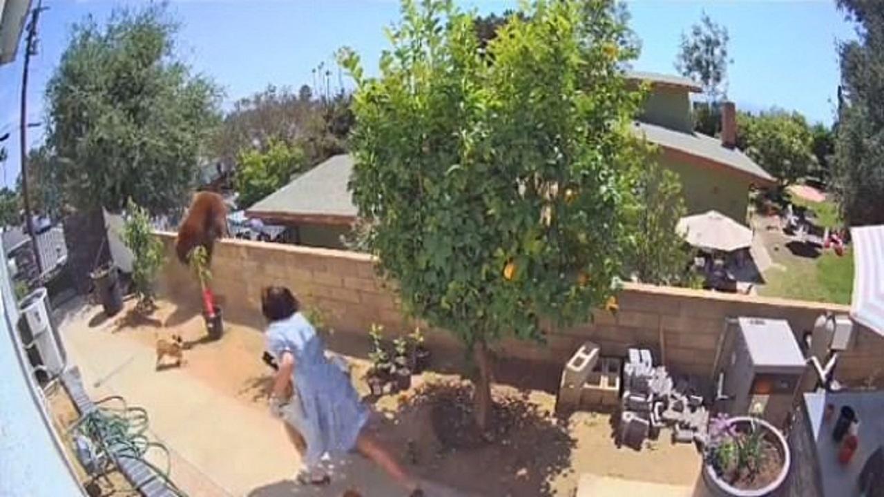 بالفيديو .. فتاة تروي كيف قاومت دبًا ضخمًا لحماية كلابها الأربعة