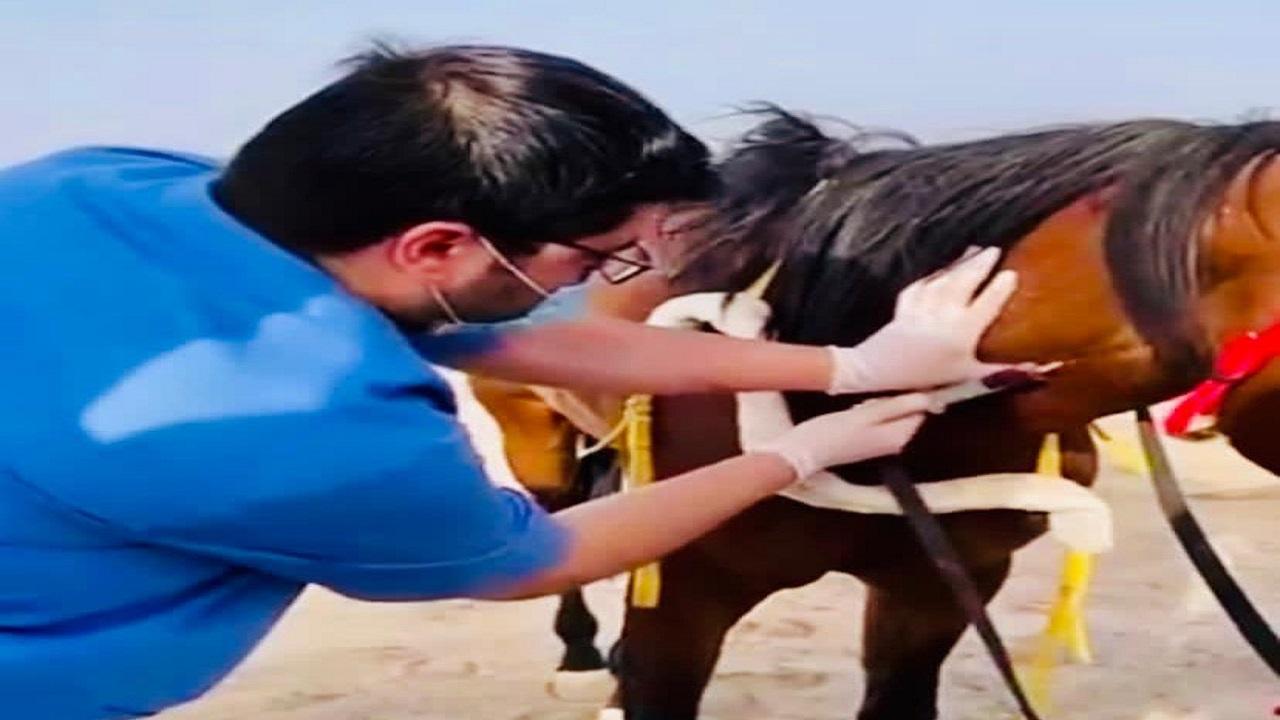 عيادات بيطرية لكشف منشطات الخيول بميدان فروسية العقيق بالباحة