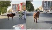 شاهد.. لحظة تجول ثور ضال في شوارع جدة
