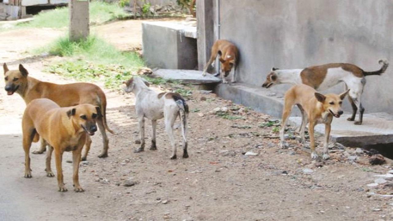 أمانة القصيم تتخذ إجراءات لمكافحة الكلاب الضالة التي ظهرت بأحد أحياء بريدة