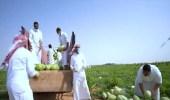 بالفيديو .. مزارعون يروون تجربتهم في زراعة البطيخ الأحمر في القصيم
