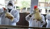 التحقيق في ظهور أول حالة بسلالة H10N3 بالصين