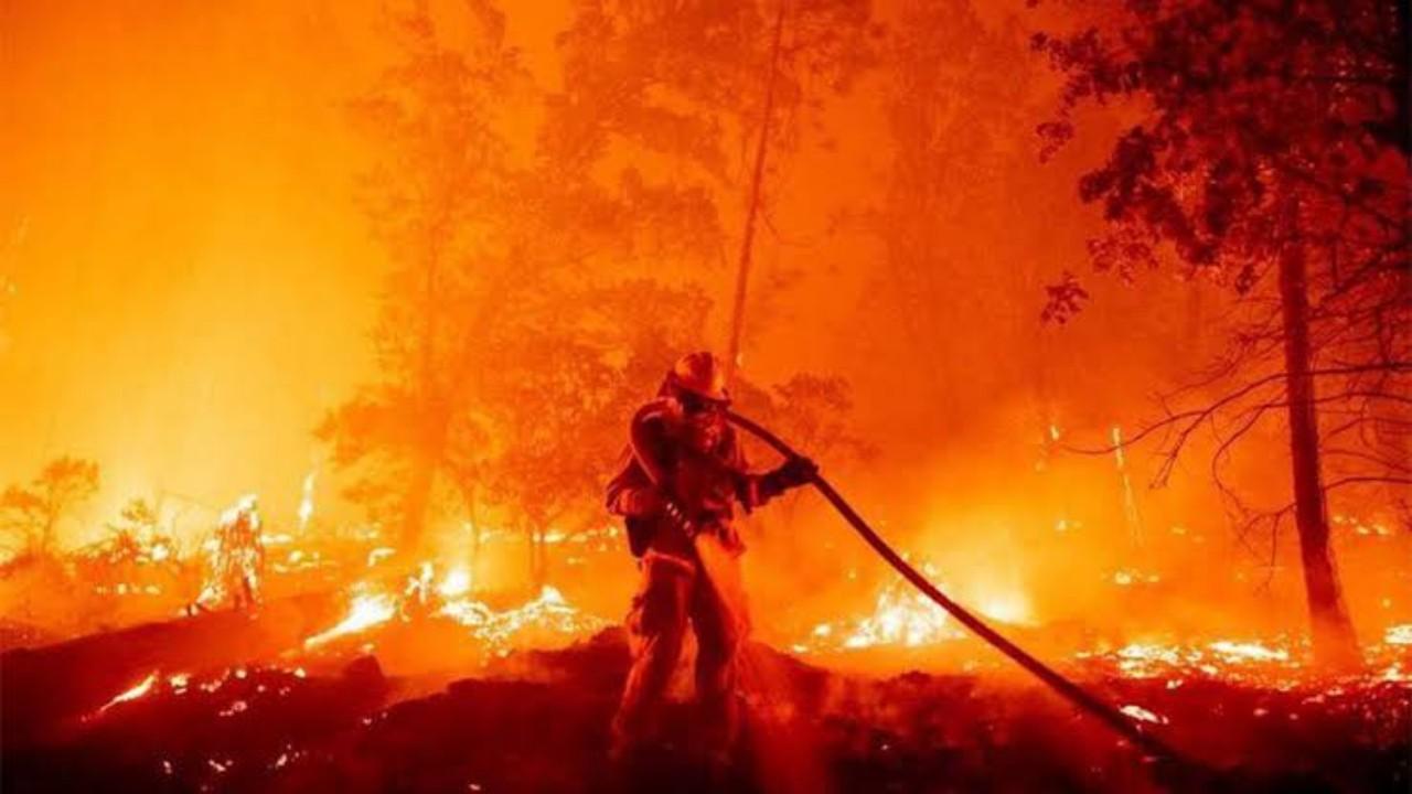 اندلاع حريق في إحدى الغابات بالنماص