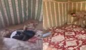 فيديو.. لحظة القبض على إثيوبي اختبأ تحت موكيت بيت شعر