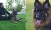 فيديو.. مواطنة تتخصص بتربية الكلاب البوليسية بعد قصة مؤلمة لها