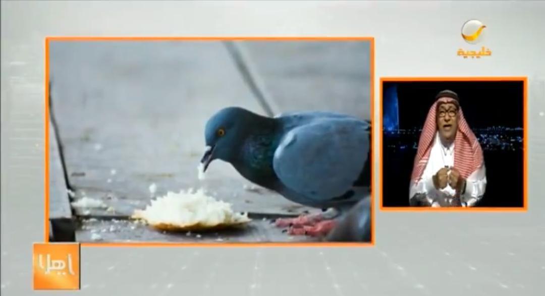 بالفيديو.. مختص يكشف مخاطر انتشار ظاهرة إطعام الطيور بالأرصفة