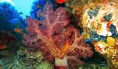 """""""البيئة"""": المملكة تمتلك شعب مرجانية الأكثر صحة وملتزمة بالحفاظ عليها واستعادتها"""