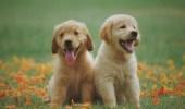 علماء: الكلاب قادرة على كشف كذب البشر