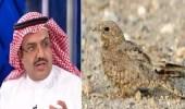 خالد النمر : تيك توك مثل ملهي الرعيان