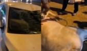 بالفيديو.. ثور هارب من صاحبه يتسبب في حادث مروع بالرياض