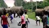 بالفيديو.. فيل يدهس طفلًا حتى الموت في شارع عام