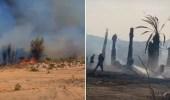 بالفيديو.. حريق يطال عدد من أشجار النخيل بمركز القوباء في عسير