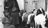 صورة لثلاث فتيات وأغنامهم بالقطيف قبل 60 عام