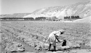 صورة قبل 74 عام لمزارع يفتح قنوات الري المغذية بمجرفة