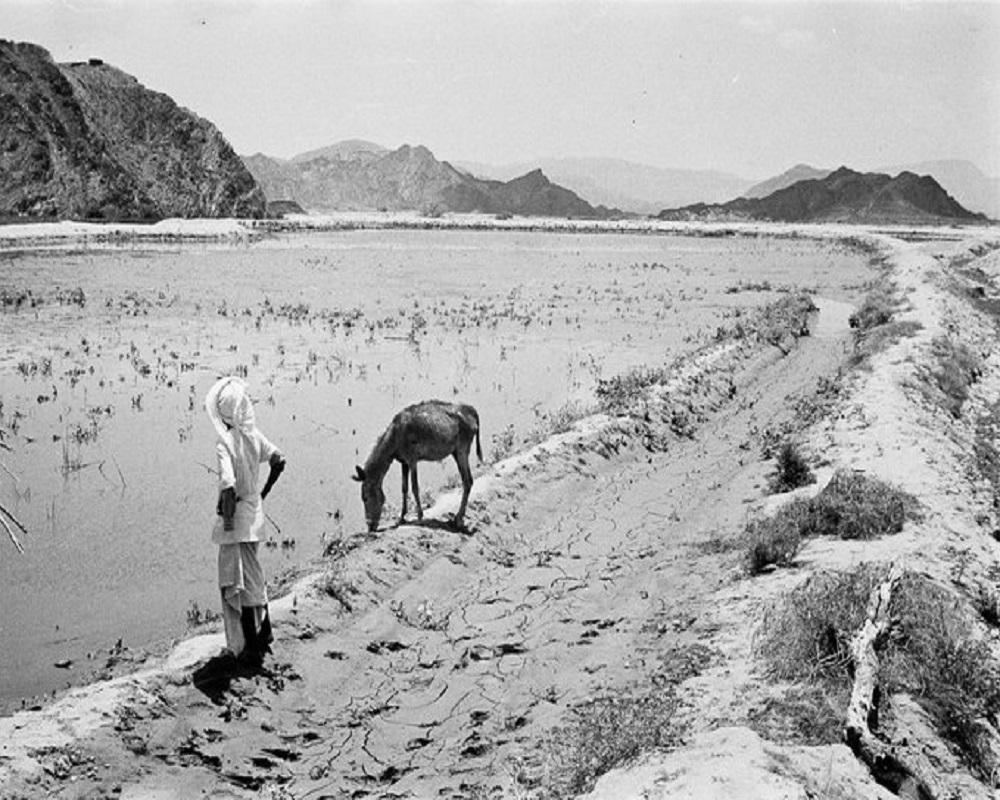 صورة رائعة لصبي يقف على حافة حقل أرز بمحايل عسير