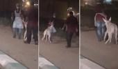 فيديو لعاملين مطعم يسحبان حمارا يثير جدلا واسعا ومطالبات بالتحقيق