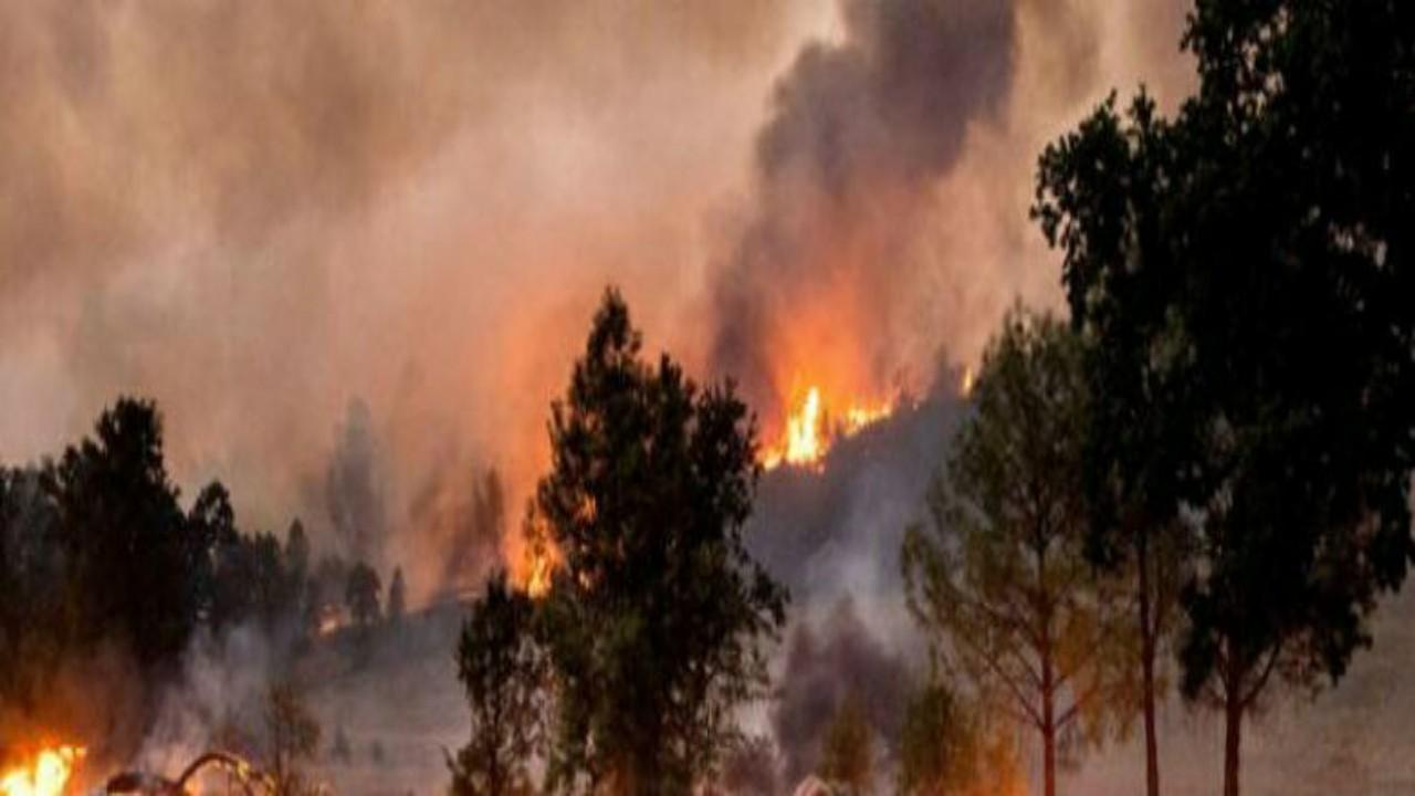 قصة تدمير 20 مبنىوإحراق غابة كاملة بسبب حفل للكشف عن جنس المولود