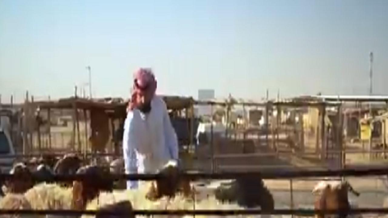 بالفيديو.. شاب سعودي ينافس الوافدين في بيع الماشية عبر تطبيقات الهاتف