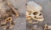 العثور على عظام وجماجم بشرية في الأفلاج