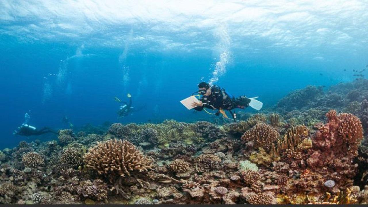 مؤسسة خالد بن سلطان للمحيطات الحية تختتم أكبر رحلة استكشافية في التاريخ