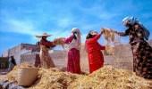 نسوة يذرين القمح في عسير قبل 44 عام