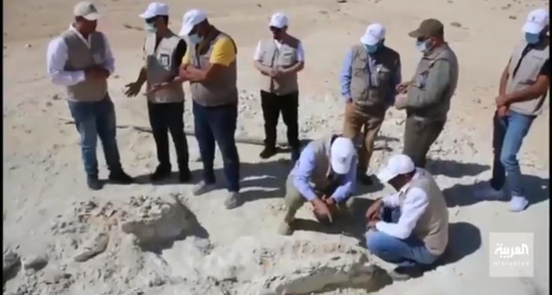 بالفيديو.. أعمال تنظيف وتصنيف بقايا الحوت المنقرض المعثور عليه بالقريات