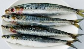 """""""مختص"""" يكشف عن أفضل 3  أنواع سمك تحارب الاكتئاب"""