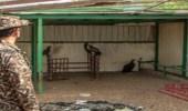 ضبط مخالفًا لنظام البيئة يتاجر بكائنات فطرية مجهولة المصدر في الرياض