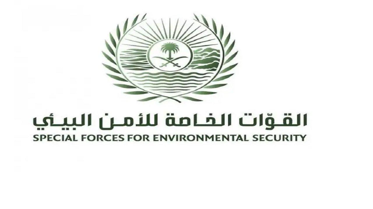 القوات الخاصة للأمن البيئي تضبط مخالفًا لنظام البيئة يبيع وينقل حطباً محليًا