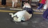 حصان يعرقل حركة السير في الطائف