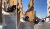 بالفيديو ..  مشهد طريف لشباب يطاردون نعامة هاربة