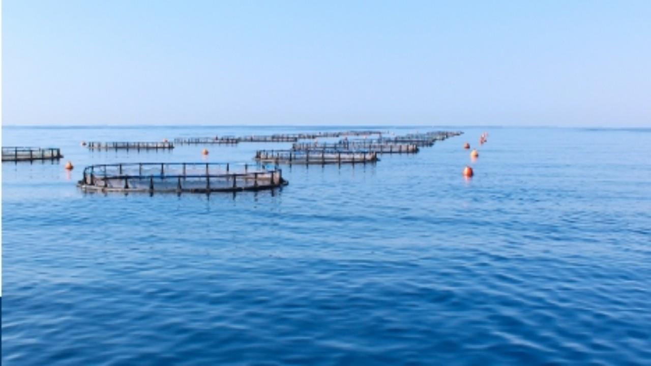 """""""البيئة"""" تطلق خدمة تراخيص تفريخ الأسماك"""