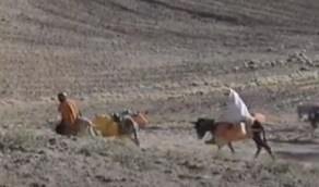 بالفيديو.. الجفاف يدفع أفغان لبيع المواشي وتزوج بناتهن القاصرات