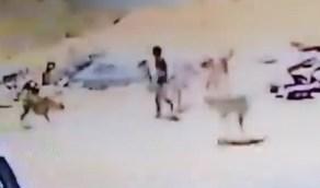 أمين تبوك يوجه بالتخلص من كلاب ضالة هاجمت طفل بحي البوادي (فيديو)