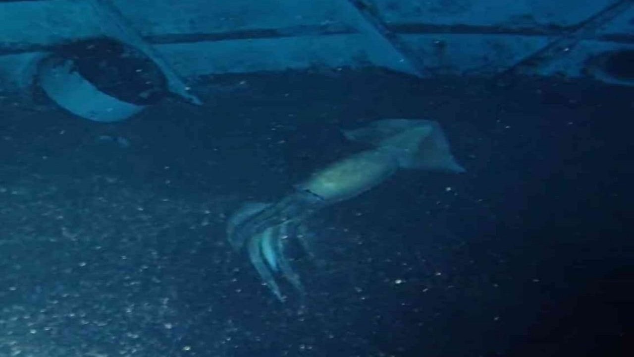مخلوق غريب في البحر الأحمر يثير التساؤلات