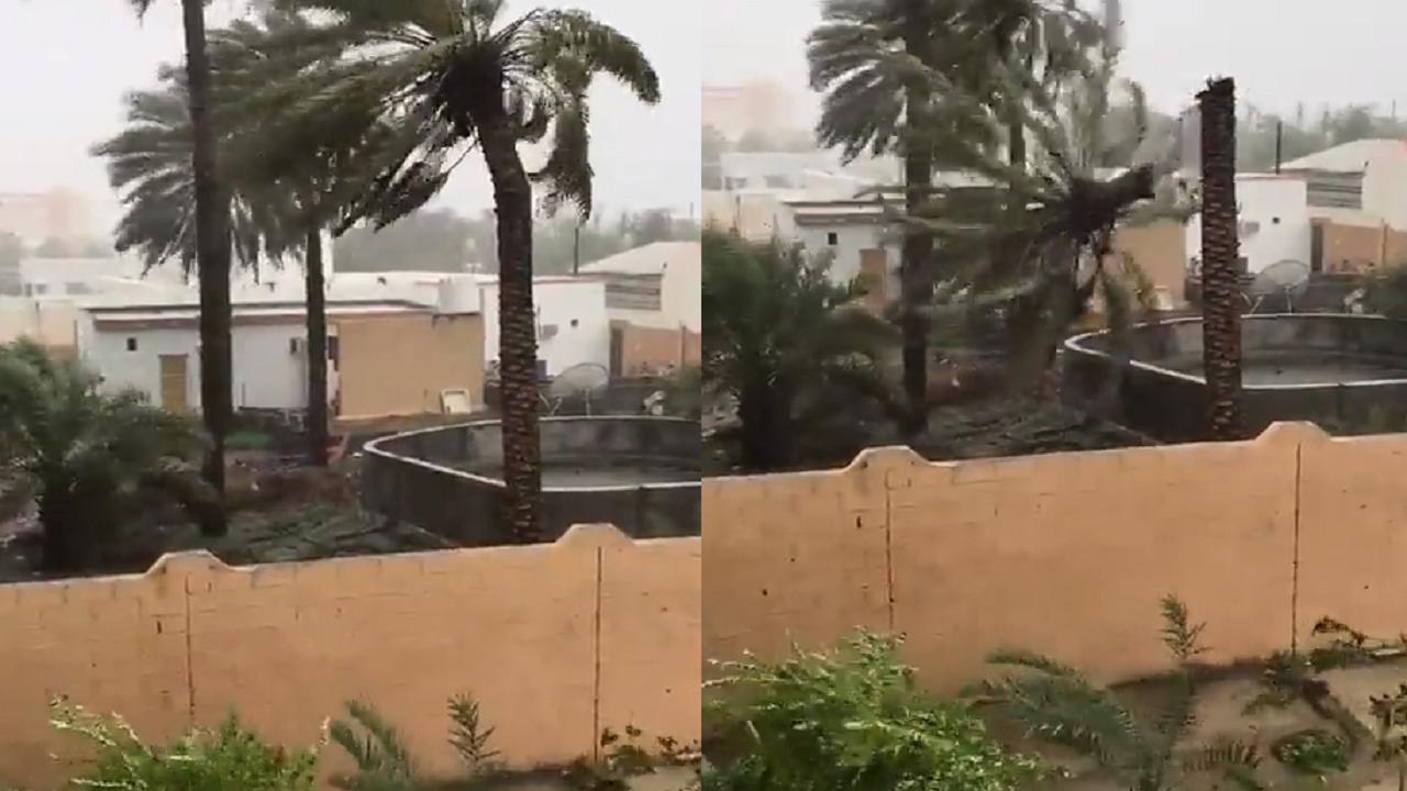 """شاهد.. إعصار شاهين يتسبب في سقوط نخيل """"بركاء"""" العمانية"""