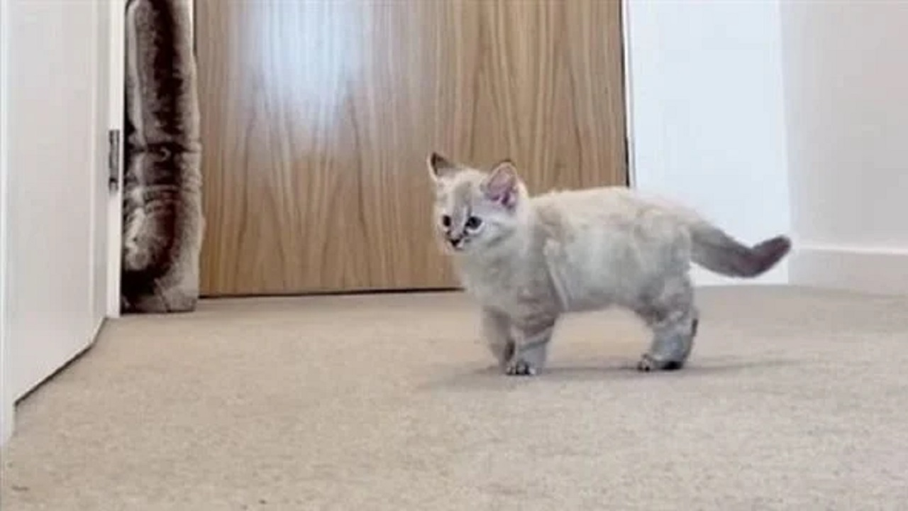 بالصور .. تصرف غير متوقع من قطة تُرِكت بمفردها في منزل
