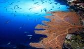 بالفيديو.. نيوم تكتشف كائنات بحرية وجزر جديدة في شمال البحر الأحمر