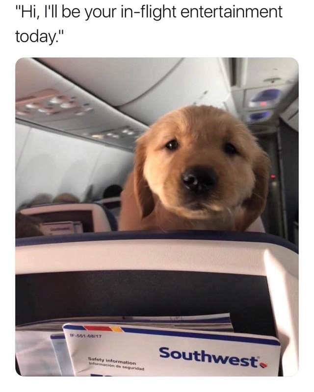 Cute puppy on a plane