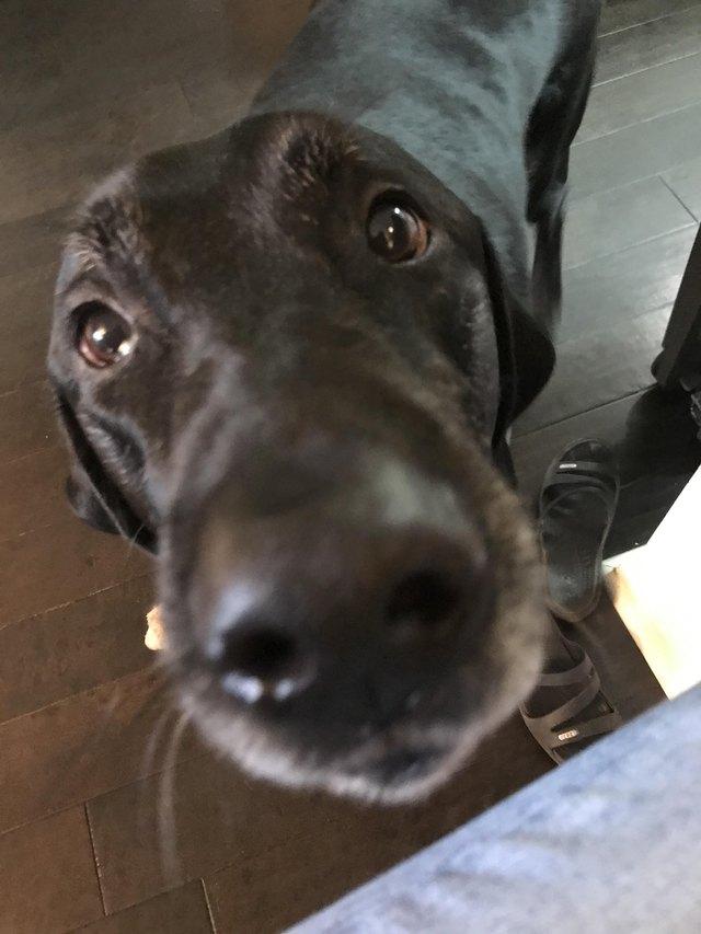 Dog gazing up at photographer.
