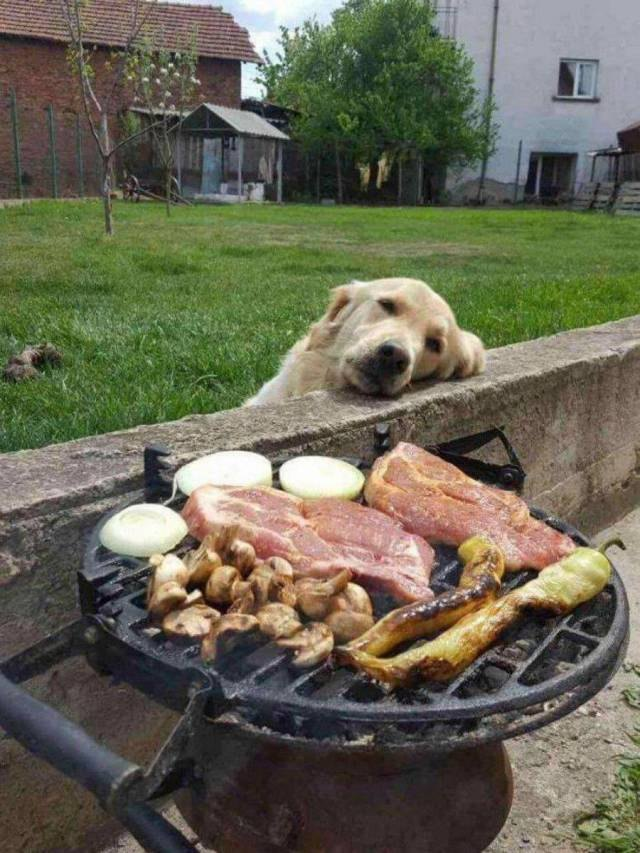 Dog resting its head on a wall, looking longingly at grill full of meat and vegetables