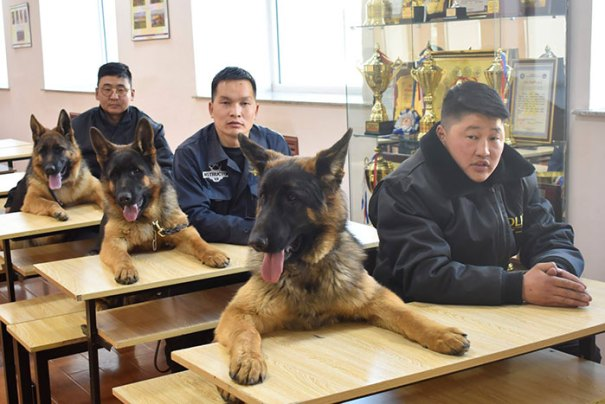 K9 At Their Training