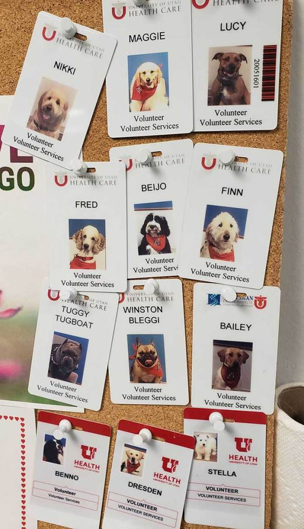 All The Good Therapy Doggos At The Hospital